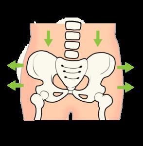 産後に開いた骨盤のイラスト